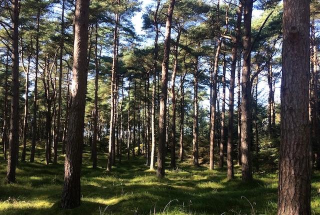 Oplev skoven vågne